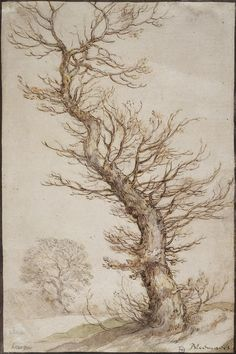 Abraham Bloemaert, 1566-1651, Dutch, Study of a Tree, 1590s.  Lead pencil, pen and brown ink, watercolour and white, 26.1 x 17.3 cm.  Hermitage Museum, Saint Petersburg.  Northern Mannerism.