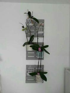Support mural  pour Orchidées... ...