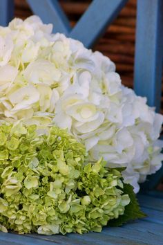 Green and White Hydrangea