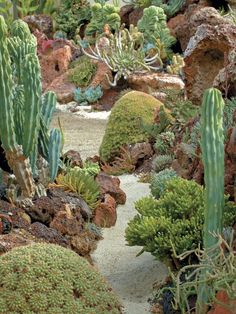 An array of succulents mimicking marine life fills the beds of the Undersea Garden