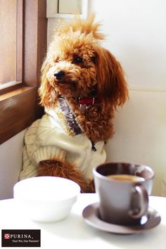 カフェでまったりだワン♪ /犬 イヌ dogs  (ネスレ日本)