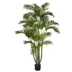 5ft Areca Silk Tree - Bring the great outdoors to your living room, office, or den with this beautiful 5' Areca Silk Tree. With several strong, sturdy stalks reaching skyward, each ending in an explosion of cascading green leaves, this specimen will have you listening for birds chirping and pining for cool breezes. Perfect for an entryway, a corner that needs some life, or even makes an ideal gift for that hard to buy for person. Number of Trunks: NA Number of Flowers: NA Number of Leaves…