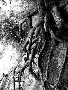 Portfolio Multimedeia: Mustavalkoisia kuvia Zombie Walk, Ex Libris, Black And White Photography, Artwork, Black White Photography, Work Of Art, Auguste Rodin Artwork, Artworks, Bw Photography