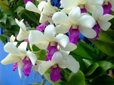 All type of orchids. flowers and plants, in gardens or wild.