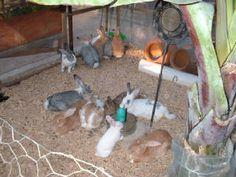La crianza de conejos de traspatio beneficia la economia familiar