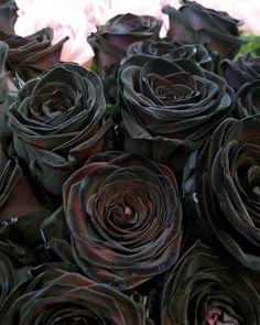 Unique colour for unique people  #blackrose #naomirose #uniquebeauty #uniquecolours #flowers #rose #flowershop Unique Colors, Rose, Flower Art, People, Colours, Instagram, Flowers, Plants, Baby