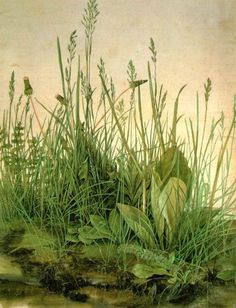 The Large Turf (1503), watercolor and gouache, Albrecht Durer.