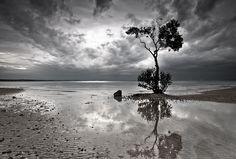 The Tree B by Jamie Lawson, via Flickr