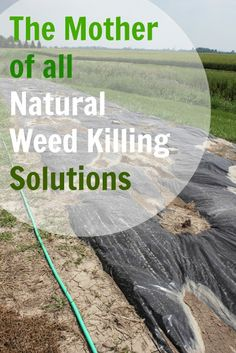 The Creek Line House: The Mother of All Natural Weed Killing Solutions