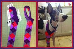 A simple and frugal support for an injured limb or to prevent licking an injury!