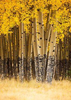 Adoro los bosques, en ellos se encuentran los seres vivos más sabios y generosos que pueblan la tierra: los árboles. Nos regalan oxígeno para respirar, frutos para alimentarnos y nos sirven de refugio.