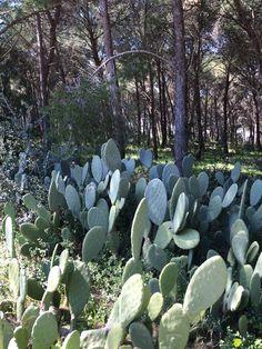 Porto Selvaggio forest