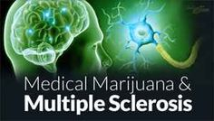 Chemicals in marijuana 'protect nervous system' against MS