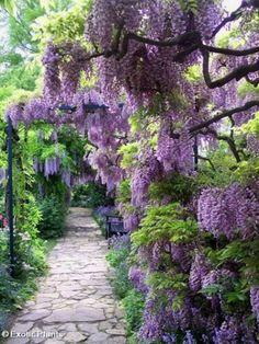 garden-paths_45.jpg