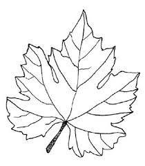 Image Result For Grape Vine Leaves Drawing Leaf Tips Wine