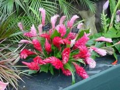 #caribbean #caribbeancolurs #caribbeanhouses #caribbeanlifestyle #flora