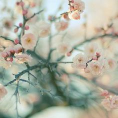 can't wait to see some blossoms like these!!