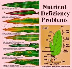 Alternative Gardning: What Does the Leaf Says About Nutrient Deficiency Problem