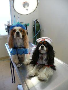 Please help my dogs win the 2014 Take Your Dog To Work Day Photo Contest! Contest. If my photo wins, I will receive a $500 donation to the pet  shelter or rescue group of my choice…My choice being Cavalier Rescue USA. Please do me a big favor by clicking on the link below to view my photo, then  click on the paws below the photo to cast your vote. http://www.takeyourdog.com/Gallery/photo-detail/3100/We-heal-with-extreme-cuteness