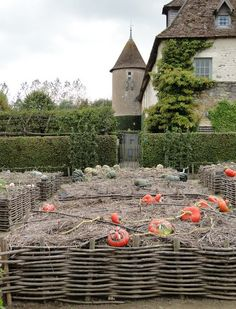 Priory d'Orsan and its beautiful Turks Turban pumpkins