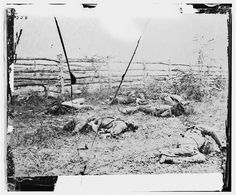 Confederate soldiers as they fell inside the fence on the Hagerstown Road at the battle of Antietam, photographed by Alexander Gardner, circa Sept 1862. #civilwar