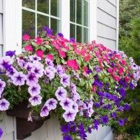 Window Box Tips - my former black thumb Easy window box tips from planting to watering. How to keep those flowers looking gorgeous! Window Box Plants, Window Box Flowers, Window Planter Boxes, Flower Boxes, Planter Ideas, Window Boxes Summer, Sun Flowers, Container Plants, Container Gardening