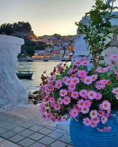 Parga, Epirus, NW Greece, Ionian Sea pink daisies sea ocean lights sky trees