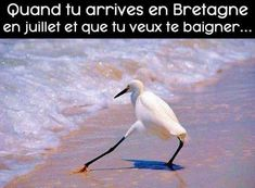 Quand tu arrive en Bretagne en juillet et que tu veux te baigner !!! #humour #blague #drole #blagues #rire #blaguer #marrant #lol #mdr #rigoler #rigolo #hilarant