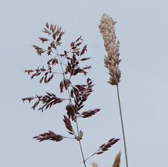 Hannah Nunn: Grasses