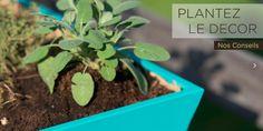 http://www.upandgreen.fr/conseils-astuces/  Cet article est là pour vous expliquer comment bien démarrer et surtout quels légumes planter. Car si vous voulez profiter de beaux légumes au printemps, c'est maintenant qu'il faut s'y mettre ! Voici le quatuor du potager, à cultiver (presque) sans effort, tout en se faisant plaisir. #jardin #interieurdesign #potager