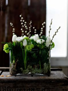 fresh green and white contemporary floral arrangement in glass tank----using white tulips, green hydrangeas, and pussy willows. fresh green and white contemporary floral arrangement in glass tank----using white tulips, green hydrangeas, and pussy willows.
