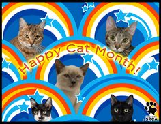 "The Houston SPCA is celebrating ""Happy Cat"" month with a very special adoption special.  Adopt any fun-loving feline for only Five Dollars today thru Sunday!  Learn more @ www.houstonspca.org"