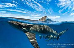Sharks #sharks #beast #sealife