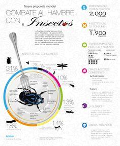 Combate el hambre con insectos.