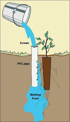In order to let your plants get efficient watering, try this deep pot irrigation. Its work is by placing an open-ended PVC pipe next to a planted seedling