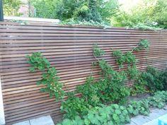 Afbeeldingsresultaat voor platoflex muur met hardhouten schutting