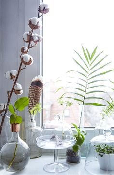 Display plants in glass containers and terrariums to see their full beauty, root to leaf! #IKEAIDEAS #indoorplants