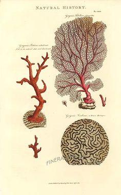 http://www.finerareprints.com/animals/pantologia-john-good/17924.jpg