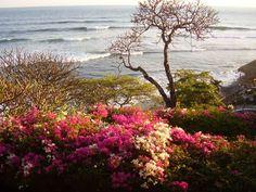 El Sunzal Beach, surfing spot in El Salvador