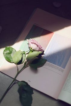 How can I read without u!? #rose