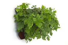 Wally One | LIving Wall Planter. love the plant choice