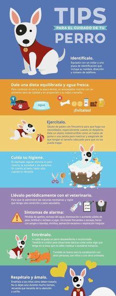 ¿ Sabes como cuidar a tu perro ?... Lee esto.