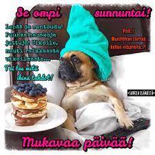 Sanoja elämästä - Hyvää sunnuntaita ❤️ | Facebook Sunday Quotes, French Bulldog, Facebook, Dogs, Animals, Animales, Animaux, French Bulldog Shedding, Pet Dogs