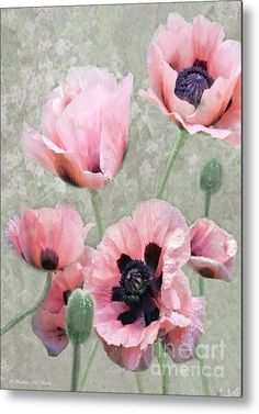 """Poppy Profusion"" Metal Print By Barbara Mcmahon, #poppies #pink"