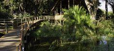 #safari #botswana #okavango delta #xigera #camp #travel #honeymoon