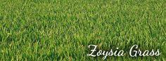 Zoysia Grass Tips / Pike Nurseries