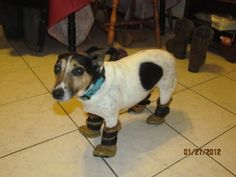 clo dog and her UGGS !!!!