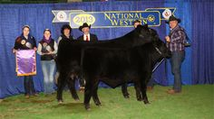 Cattleinmotion.com is proud to present Showday 2013-01-13 from the NWSS