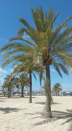 Beach El Arenal Mallorca 04.27.16 Travel Plan, My Happy Place, Where To Go, Beautiful Places, Wanderlust, Beach, Plants, Summer, Viajes