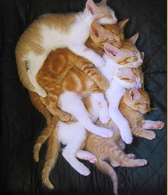 The Cuddle Puddle...A good Cuddle Puddle requires total commitment from each participant. Schedule around nap time for best results.